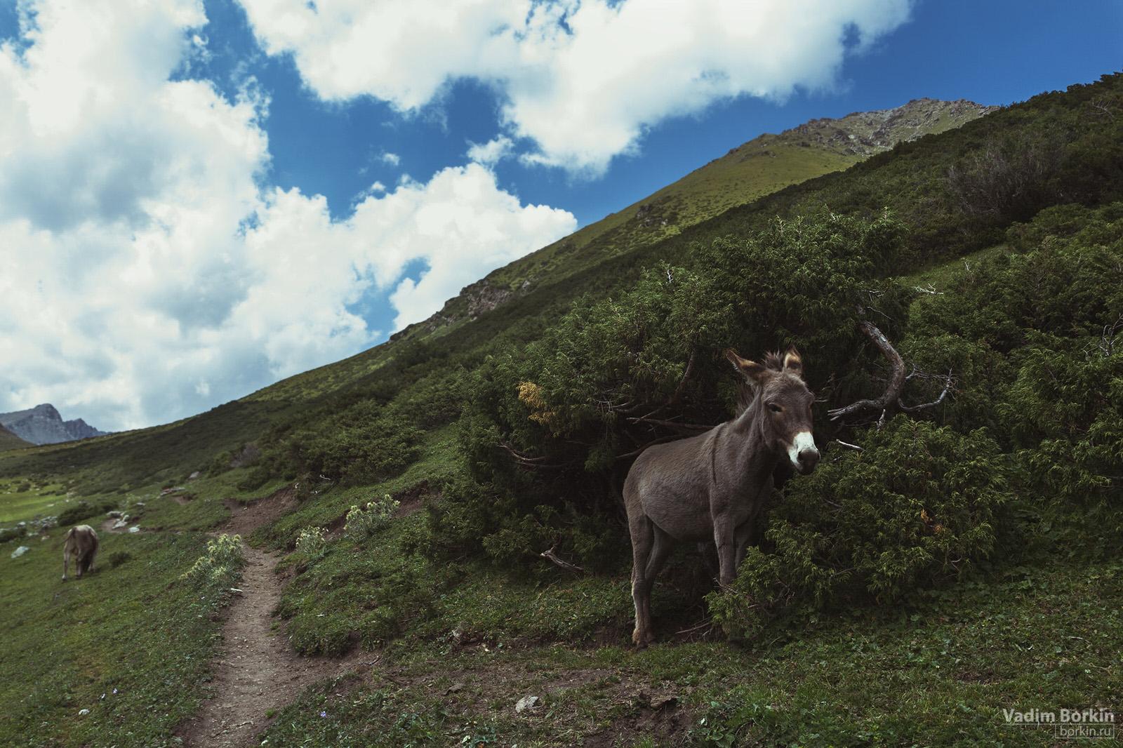 фото Осел в горах
