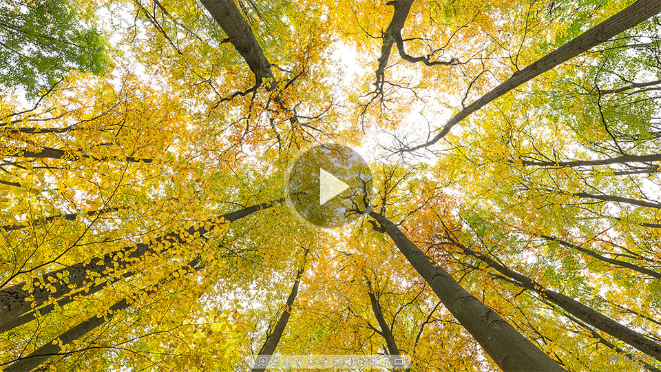 Осень-лес-плей.jpg